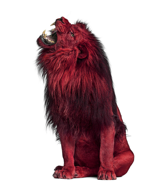 WatchGuard Lion Webinar